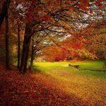 Vivere l'autunno