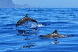 Poseidon - delfini